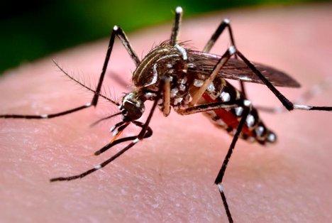 dengue-mosquito-bite